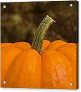 Pumpkin Macro 4 A Acrylic Print