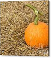 Pumpkin On The Straw  Acrylic Print