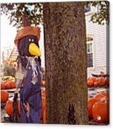 Pumpkin Patch Crow Acrylic Print