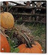 Pumpkin Peepers Acrylic Print