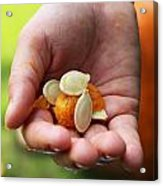 Pumpkin Seed Acrylic Print