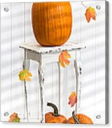 Pumpkins For Thanksgiving Acrylic Print