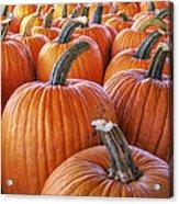 Pumpkins Galore - Autumn - Halloween Acrylic Print