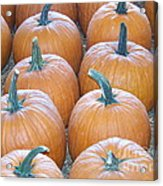 Pumpkins Galore Acrylic Print by Kevin Croitz