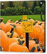 Pumpkins II Acrylic Print