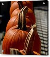 Pumpkins In A Row Acrylic Print by Amy Cicconi