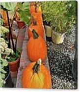 Pumpkins In A Row Acrylic Print