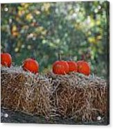 Pumpkins Acrylic Print by Lorena Mahoney