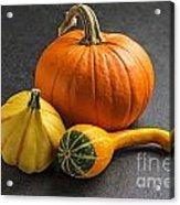Pumpkins On A Slate Plate Acrylic Print by Palatia Photo