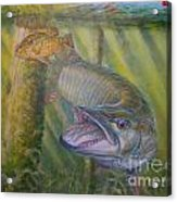 Pumpkinseed Peril Acrylic Print by Charles Weiss