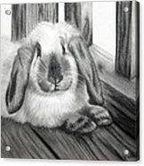 Punky Bunny Acrylic Print