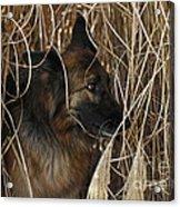 Pup Hiding In Tall Grass Acrylic Print