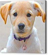 Pupp Acrylic Print