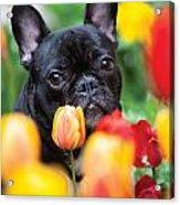 Puppie And Dog  Acrylic Print