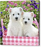 Puppies In A Pink Basket Acrylic Print