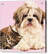 Puppy And Kitten Acrylic Print by Greg Cuddiford