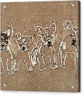 Puppy Brigade Acrylic Print