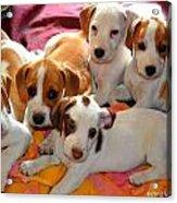 Puppy Crew Acrylic Print