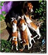 Puppy Dinner Time Acrylic Print