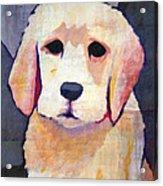 Puppy Dog Acrylic Print by Lutz Baar