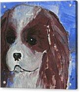 Puppy Doll Acrylic Print