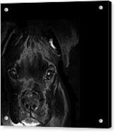 Puppy Eyes Acrylic Print