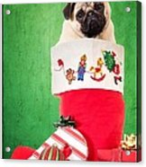 Puppy For Christmas Acrylic Print