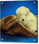 Puppy Glove... Acrylic Print by Will Bullas