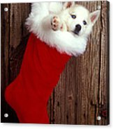 Puppy In Christmas Stocking Acrylic Print by Garry Gay