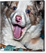 Puppy Laughter Acrylic Print