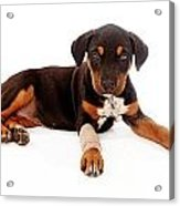 Puppy Laying With Injury Acrylic Print by Susan Schmitz
