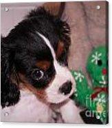 Puppy Look Acrylic Print