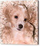 Puppy Love Acrylic Print