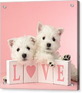 Puppy Love Acrylic Print by Greg Cuddiford