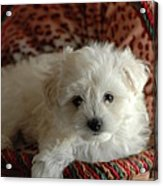 Puppy Love Acrylic Print by Scott Ware