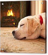 Puppy Sleeping By A Fireplace Acrylic Print