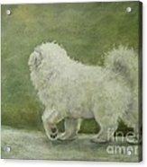 Puppy Struttin' Acrylic Print