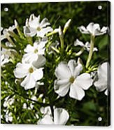 Pure And Simple Elegance Acrylic Print