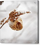 Pure Bliss Acrylic Print