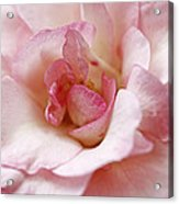 Pure Rose Acrylic Print