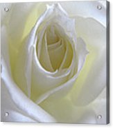 Pure Rose  Acrylic Print by Etti PALITZ
