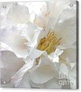 Pure White Acrylic Print