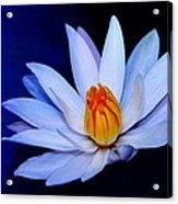 Pure White On Blue Acrylic Print