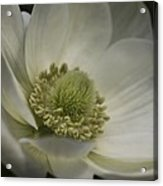 Pureness In White Acrylic Print