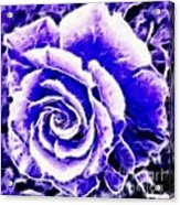 Purple And Blue Rose Expressive Brushstrokes Acrylic Print