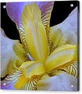 Purple And Gold Acrylic Print