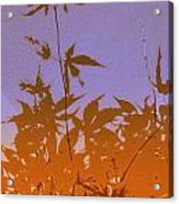 Purple And Orange Haiku Acrylic Print