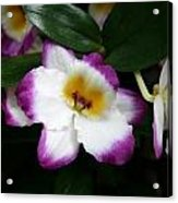 Purple And White Flower At Biltmore Estate Acrylic Print