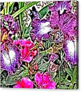 Purple And White Irises And Pink Flowers Acrylic Print