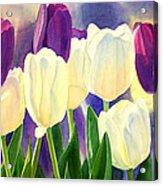 Purple And White Tulips Acrylic Print